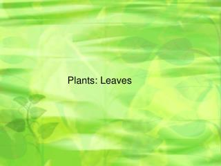 Plants: Leaves