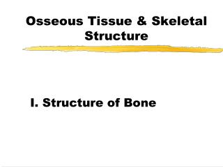 Osseous Tissue & Skeletal Structure