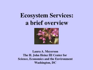 Ecosystem Services: a brief overview