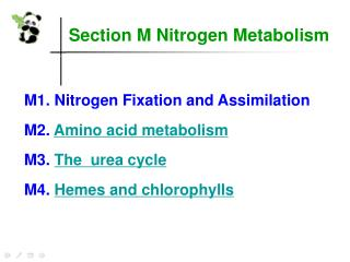Section M Nitrogen Metabolism