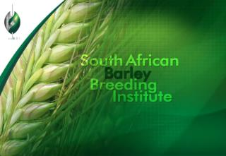 SABBI Barley Program
