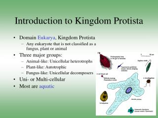 Introduction to Kingdom Protista