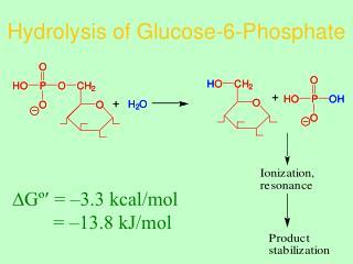 Hydrolysis of Glucose-6-Phosphate