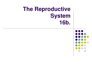 The Reproductive System 16b.