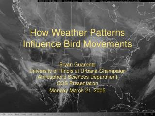 How Weather Patterns Influence Bird Movements