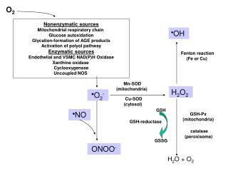 Nonenzymatic sources Mitochondrial respiratory chain Glucose autoxidation