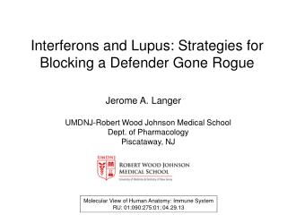 Interferons  and Lupus: Strategies for  Blocking  a  Defender Gone Rogue