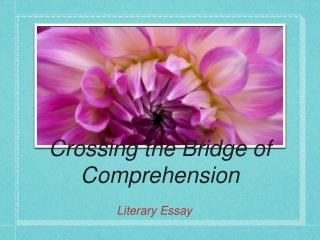 Crossing the Bridge of Comprehension
