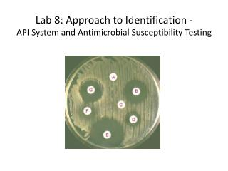 Lab 8: Approach to Identification - API System and Antimicrobial Susceptibility Testing