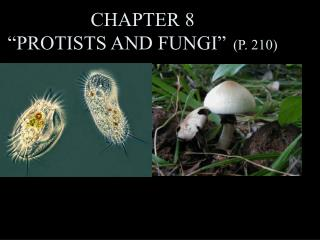 "CHAPTER 8 ""PROTISTS AND FUNGI""   (P. 210)"