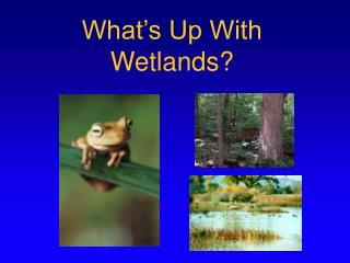 What's Up With Wetlands?