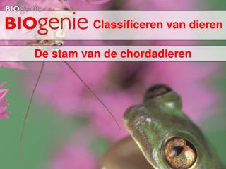 Classificeren van dieren