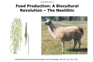 Class Slides Set 32 Food Production: A Biocultural Revolution – The Neolithic