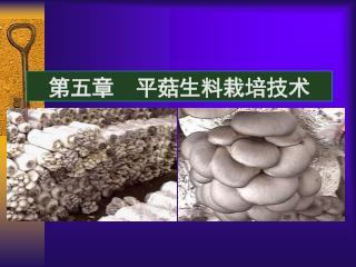 第五章 平菇生料栽培技术