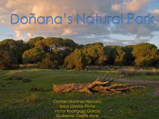 Doñana's  Natural Park
