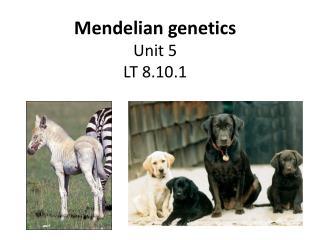 Mendelian genetics Unit 5 LT 8.10.1