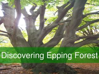 Discovering Epping Forest