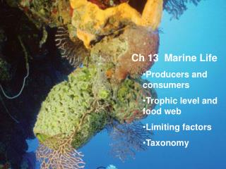 Ch 13  Marine Life Producers and consumers Trophic level and food web Limiting factors Taxonomy