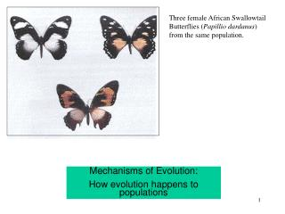 Mechanisms of Evolution: How evolution happens to populations