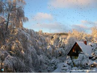 Vintern är vacker