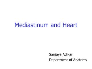 Mediastinum and Heart