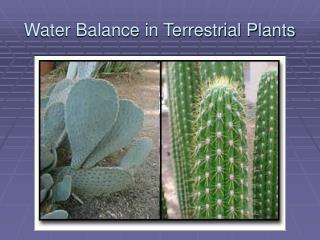 Water Balance in Terrestrial Plants