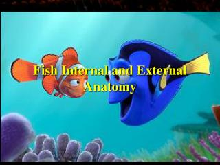 Fish Internal and External Anatomy