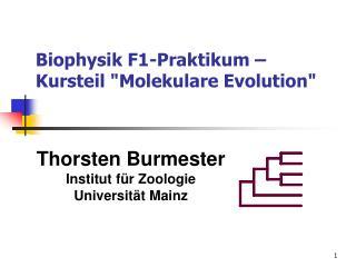 "Biophysik F1-Praktikum – Kursteil ""Molekulare Evolution"""