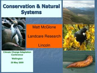 Conservation & Natural Systems