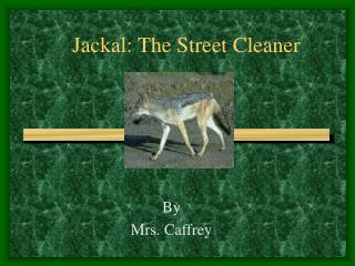 Jackal: The Street Cleaner