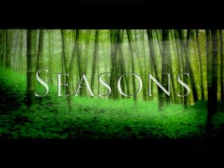 The Beauty of Seasons Third person action adventure Sad samurai in a vast forest Combat, control, camera, 		characters,