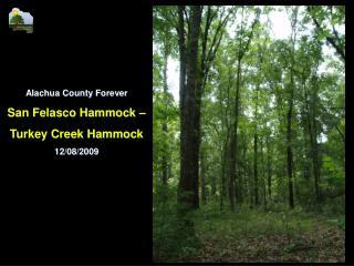 Alachua County Forever San Felasco Hammock – Turkey Creek Hammock 12/08/2009