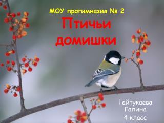 Птичьи домишки