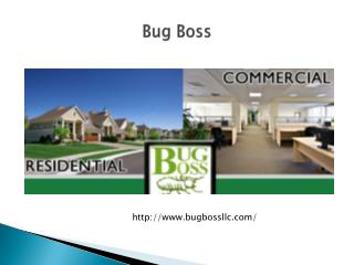 Pest, Termite Control, Exterminator and Bed Bug Removal Jers