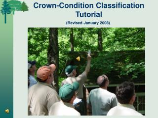 Crown-Condition Classification Tutorial