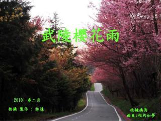 武陵櫻花雨