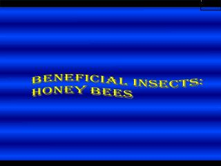 Beneficial insects: HONEY BEES