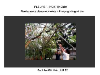 FLEURS - HOA @ Dalat Flamboyants blancs et violets – Phượng trắng và tím