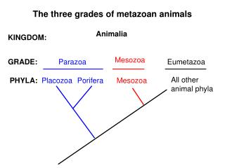 The three grades of metazoan animals