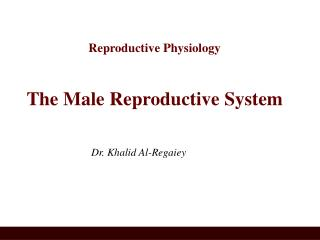 Reproductive Physiology The Male Reproductive System