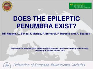 DOES THE EPILEPTIC PENUMBRA EXIST?