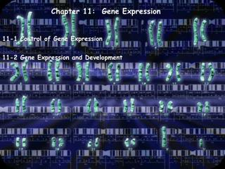 Chapter 11:  Gene Expression