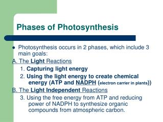 Phases of Photosynthesis