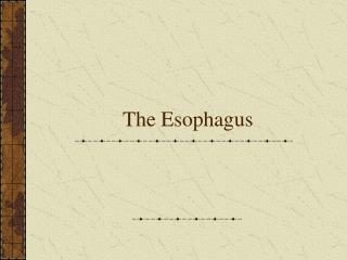 The Esophagus