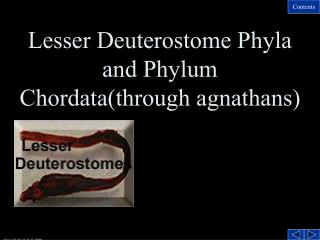 Lesser Deuterostome Phyla and Phylum Chordata(through agnathans)