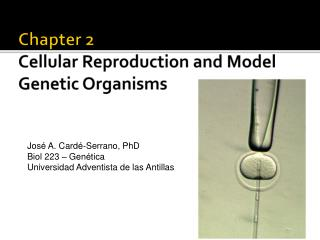 Chapter 2 Cellular Reproduction and Model Genetic Organisms
