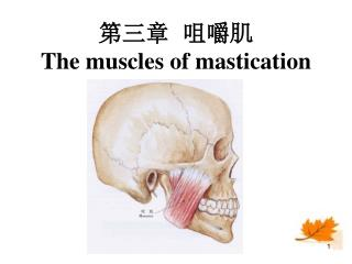 ???  ??? The muscles of mastication
