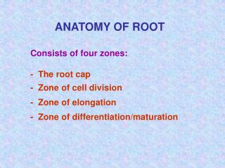 Consists of four zones: -  The root cap -  Zone of cell division -  Zone of elongation