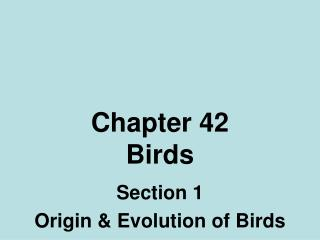Chapter 42 Birds