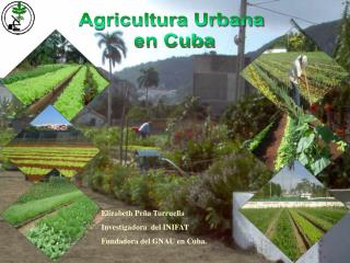 Agricultura Urbana  en Cuba